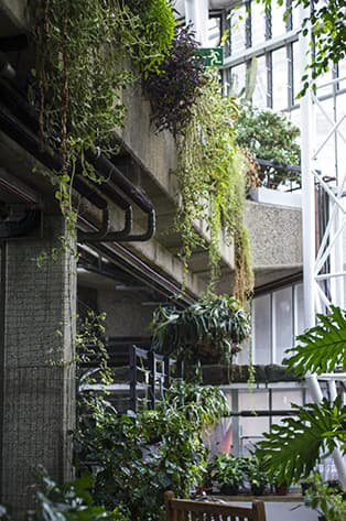 Conservatory At The Barbican blog
